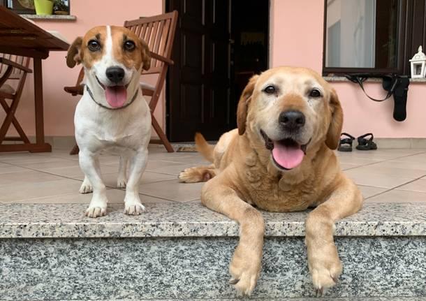 Giornata internazionale del cane: i video più belli