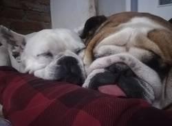I cani dei nostri lettori
