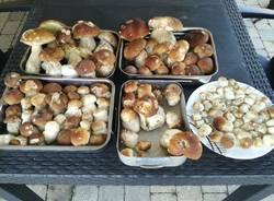 I primi funghi della stagione