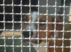 protezione animali di legnano canile emergenza estiva   18