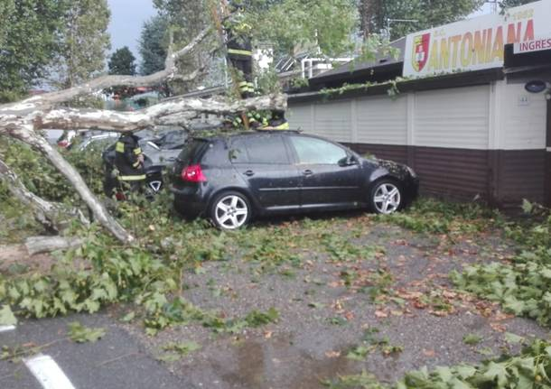 albero caduto busto arsizio