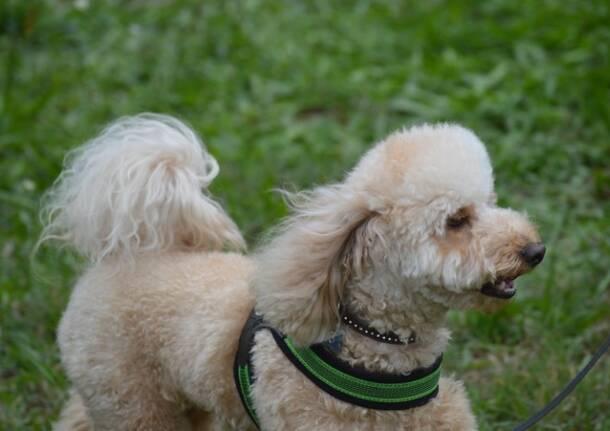 cane fantasia legnano canile protezione animali  28