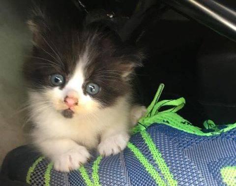 Abbiamo trovato questo gattino a Buguggiate