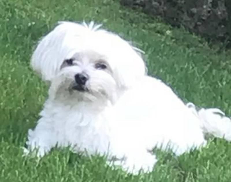 Aiutateci a trovare Lilly, scomparsa a Gavirate
