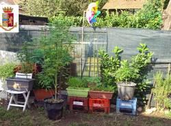 coltivazione marijuana giardino omegna varesino