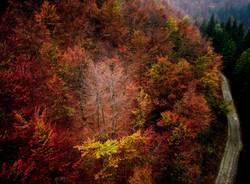 foliage oasi zegna