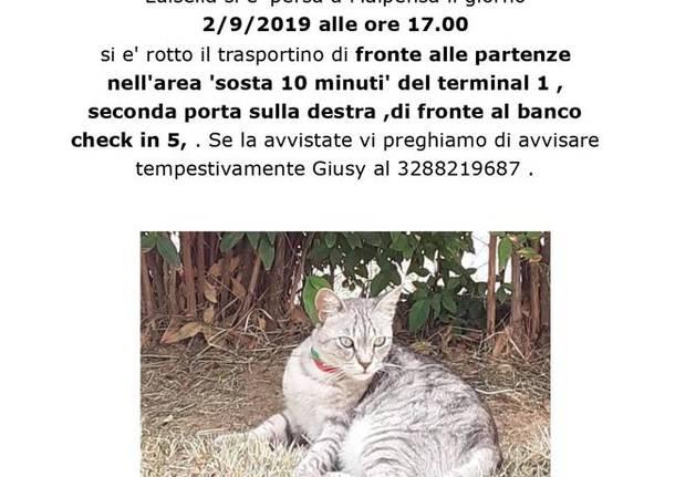 gattina dispersa a Malpensa