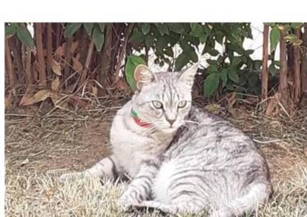 luisella gattina dispersa a Malpensa