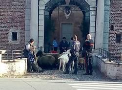 nicolò tandurella pastore pecore  comune fagnano olona