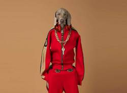 William Wegman al MASI