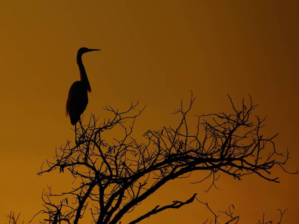 airone al tramonto - foto di Paolo De Tomasi