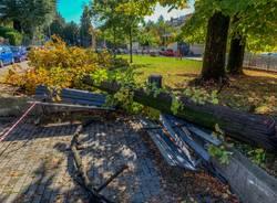 albero caduto varese