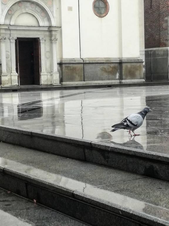 Passero solitario