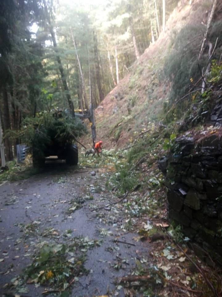 Iniziato il taglio dei pini di Lozzo