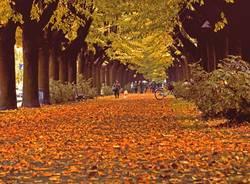 foliage autunno cassano magnago daniele beati