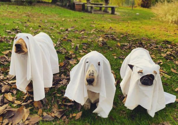 Halloween - foto di Elisa Solinas