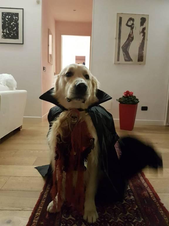 Jos è pronto per Halloween
