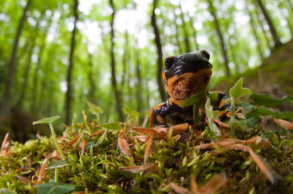 La salamandra - foto di Franca Giannessi