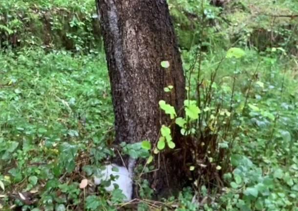 schiuma dagli alberi valle olona