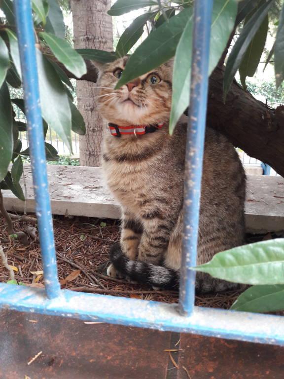 Trovato gattino Casbeno
