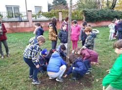 Caronno Pertusella: festa dell'albero con i piccoli della scuola sant'Alessandro