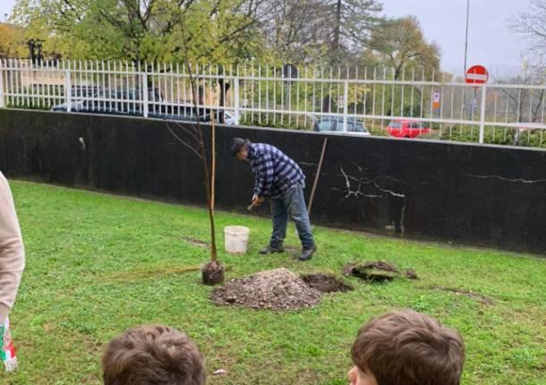 Festa dell'albero, anche con la pioggia