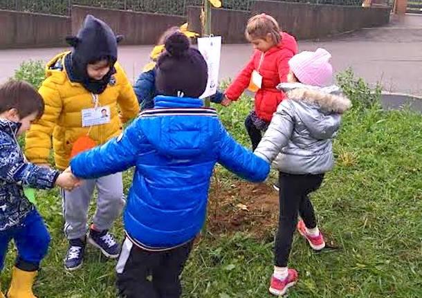 giornata mondiale albero comune di malnate