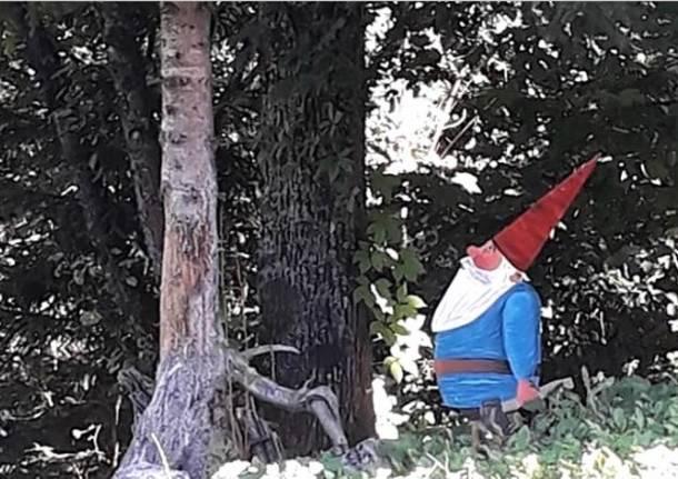 Il bosco dei colori