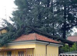 Olgiate Olona - pini caduti in via Roma