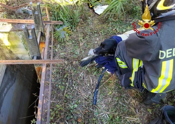 Cane salvato a Travedona Monate dai Vigili del Fuoco