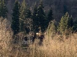La discarica di Cadegliano: come si vede dalla Svizzera