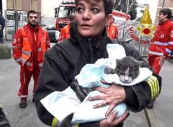 Gatto rianimato dai pompieri