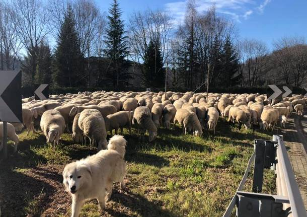Pecore - fotodi Luca Leone