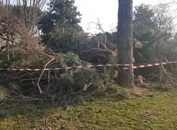 A Cislago si discute dell'abbattimento di 19 alberi
