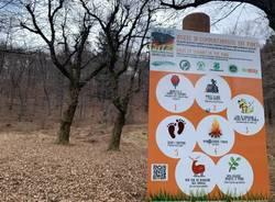 Le selve castanili, capitale naturale di Varese