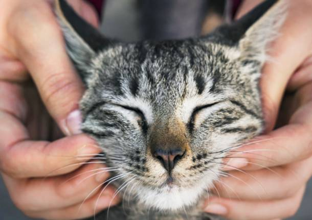 Enpa Saronno festeggia la 'Festa del Gatto'