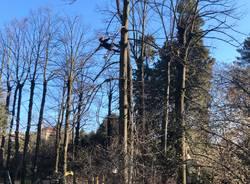 treeclimbing parco bassetti