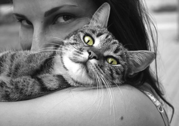 Oggi Festa Nazionale del gatto , ecco perché il 17 febbraio