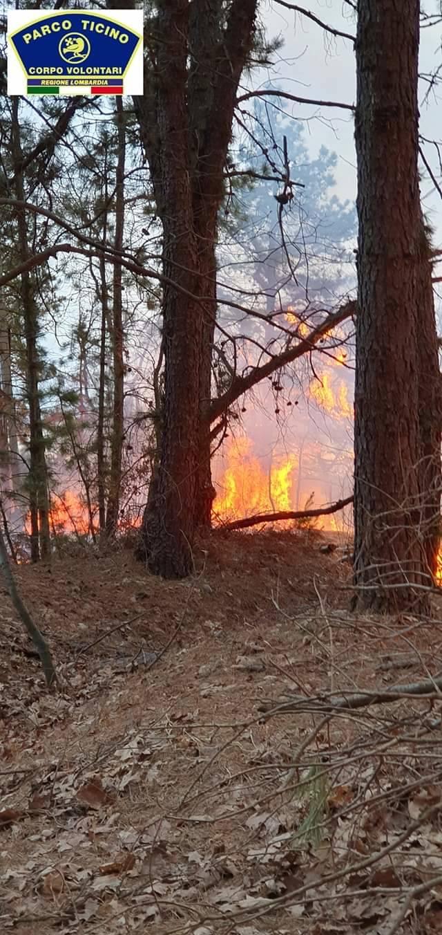 Incendio pineta Vigano