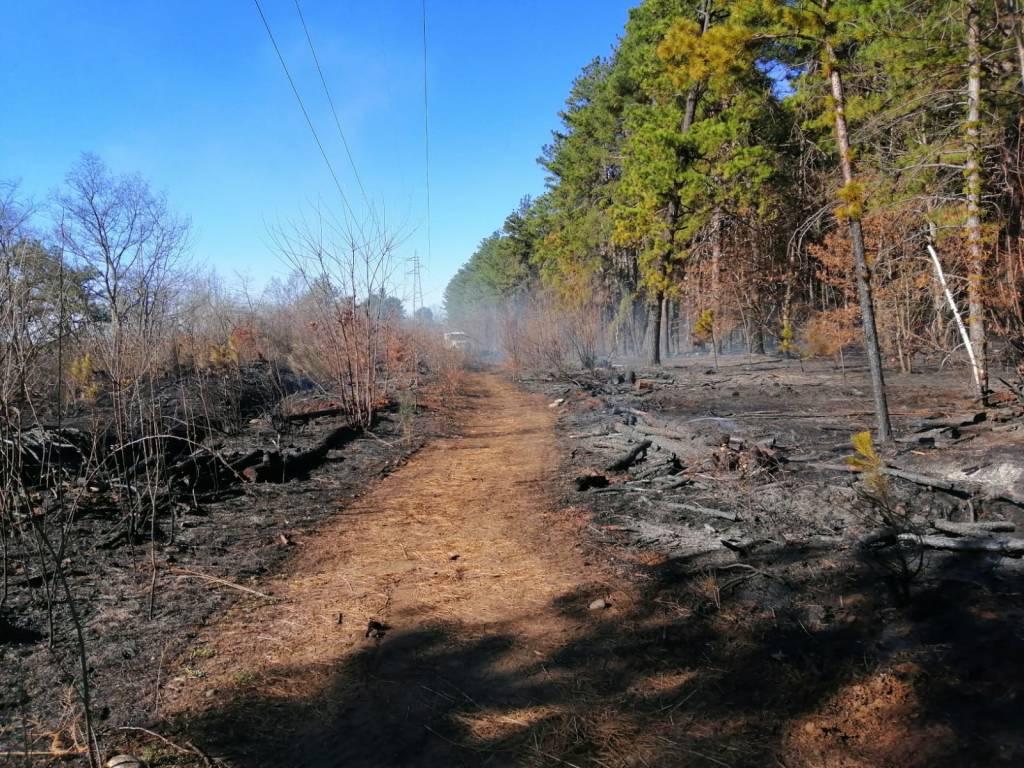 La pineta e la brughiera ferite dall'incendio