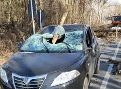 Rami spezzati dal vento distruggono il parabrezza di un'auto