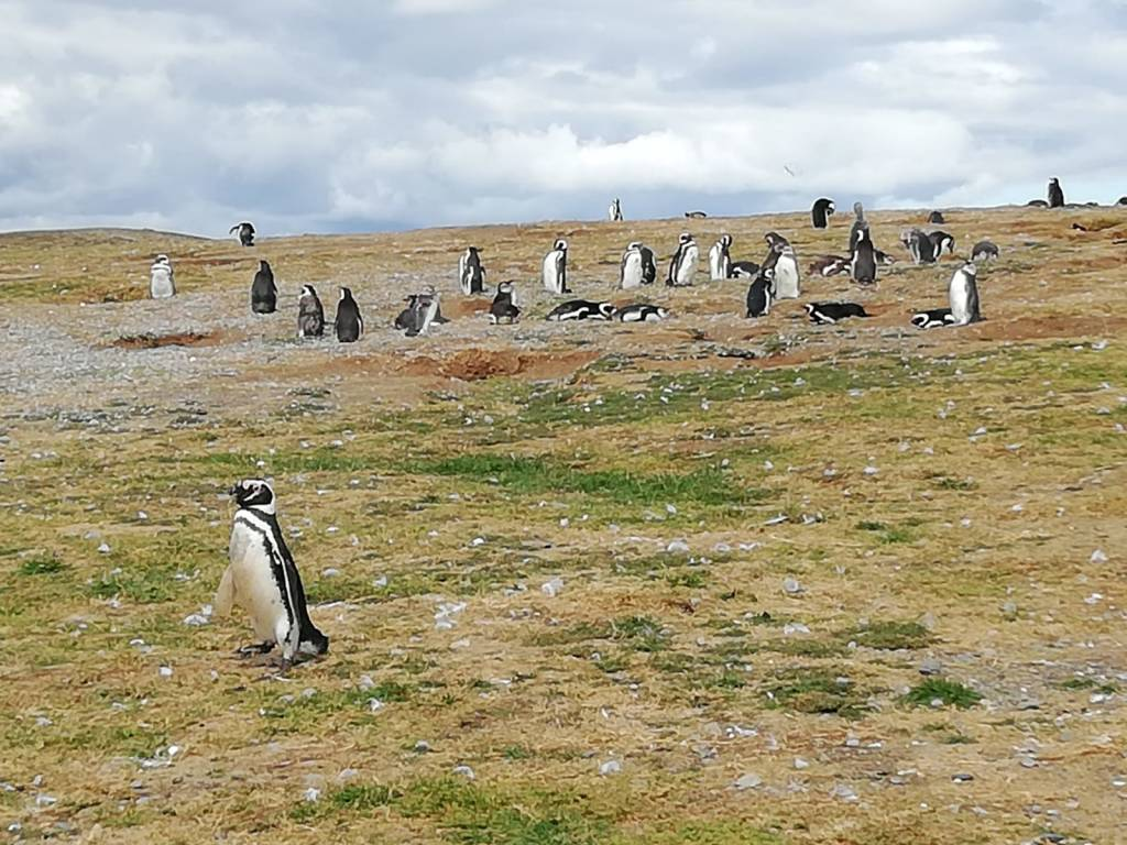 Viaggio lungo la costa dell'Argentina