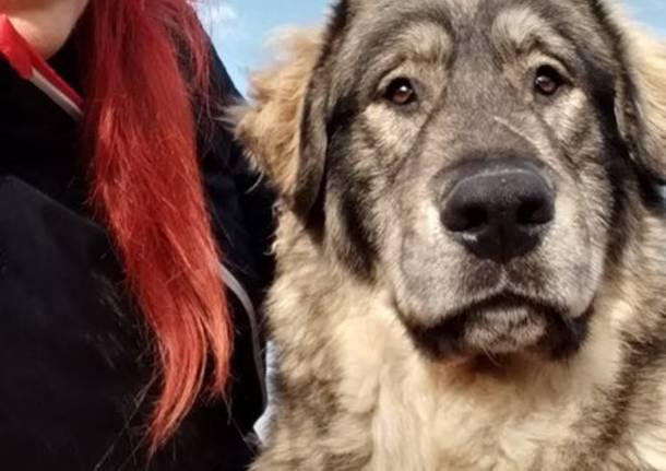 Yoghi e Bubu, i cani abbandonati a Gerenzano cercano casa