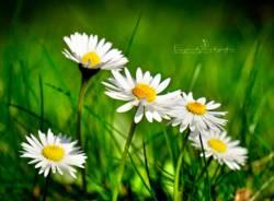 I fiori del mio giardino