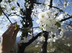 Il risveglio della primavera - Contest Parco Lura