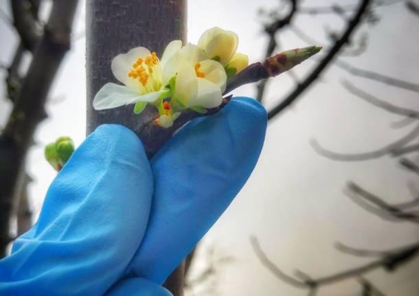 Lattice e fiori