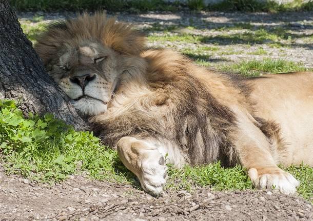 leone safari park