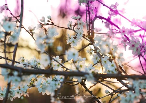Primavera e natura