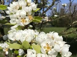 primavera in giardino - foto di alessandra tonta