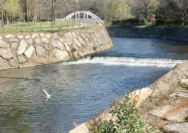 fiume olona